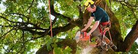 Tree Removal Services - Melbourne