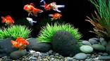 Modern Fish Aquarium Pet Centre