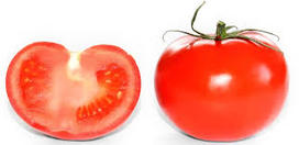 Do tomatoes have nicotine in them?