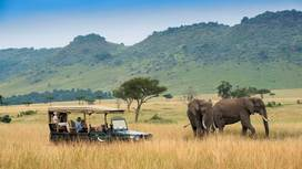 11 Best Kenya Safari Tours Companies