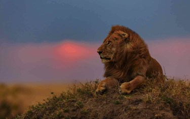5 EXCITING THINGS TO DO IN MASAI MARA