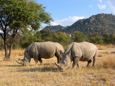 TOP 10 BEST DESTINATIONS IN KENYA FOR A GAME DRIVE