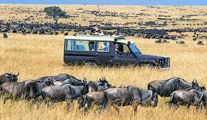 How much is safari trip to Kenya?
