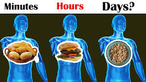 How long does the food stay in your stomach?